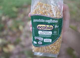 Milho de pipoca Ecobio